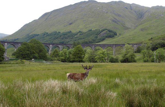 Un assaggio di Scozia